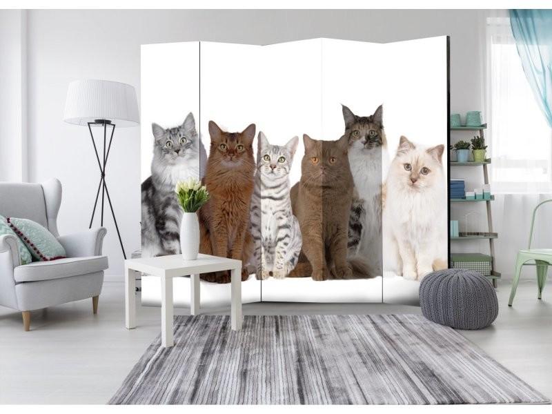 Paravent 5 Volets Sweet Cats Ii A1 Paravent1081 Vente De